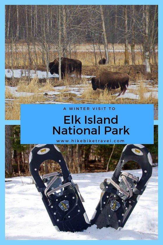 A winter visit to Elk Island National Park in Alberta