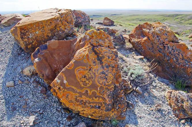 Beautiful lichen patterns on the rock