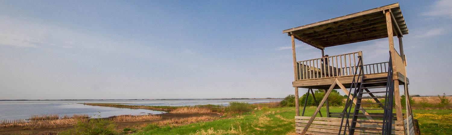 Quill Lakes birding