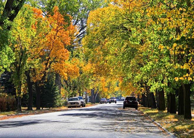 Quiet tree lined streets in Maple Creek, Saskatchewan