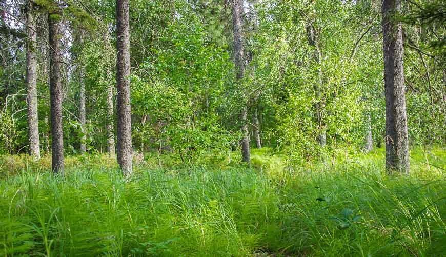 Beautiful woods on Blackett West Island Lake