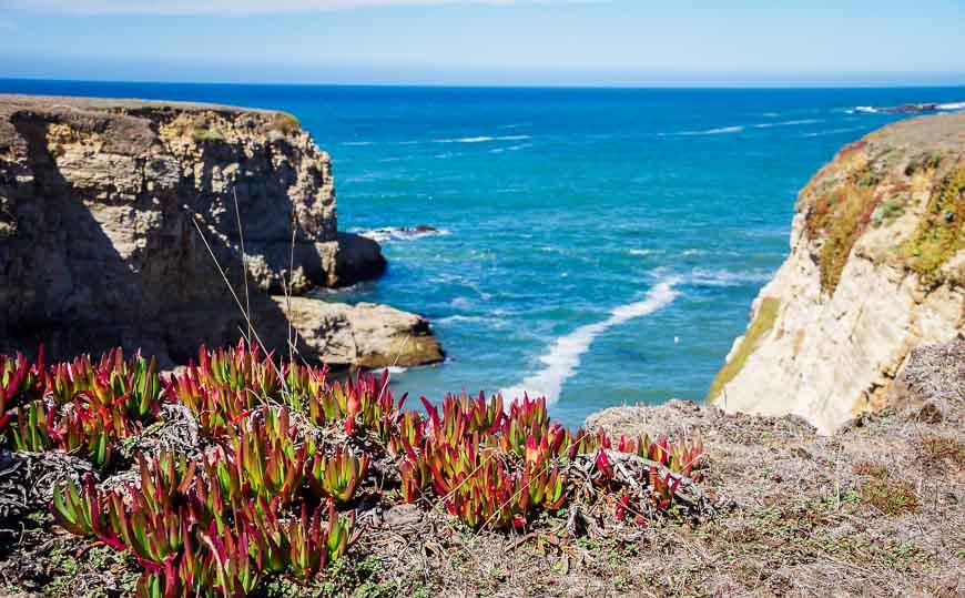 A blast of colour along the cliff edge