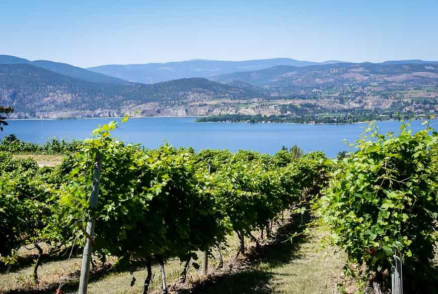 An Okanagan winery in a beautiful setting