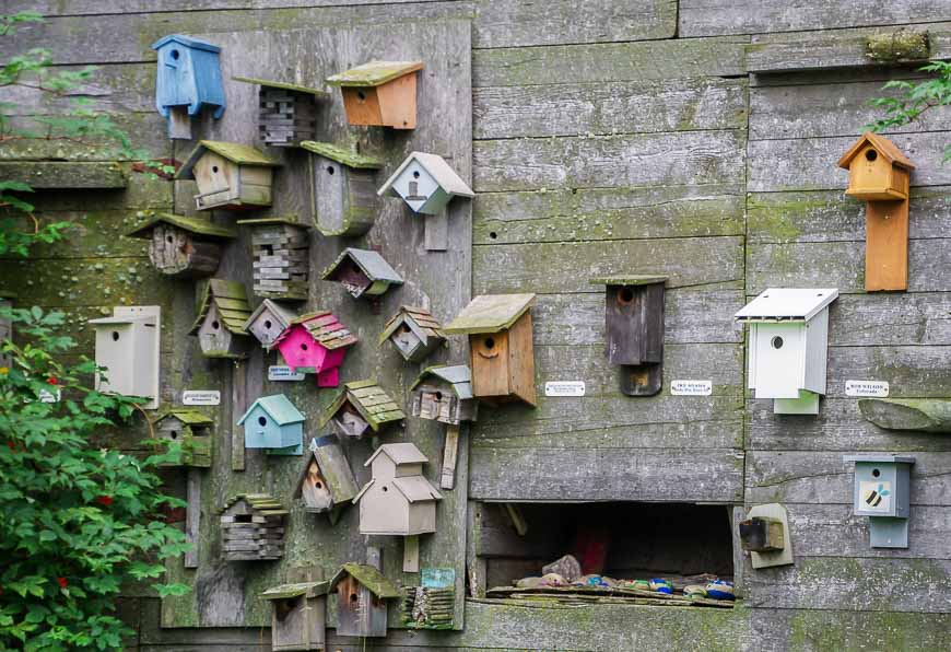 No shortage of bird houses at the Ellis Bird Farm