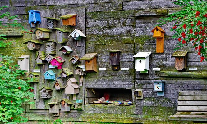 An assortment of birdhouses at the Ellis Bird Farm