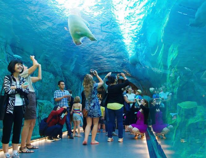 The polar bear tunnel at the Assiniboine Zoo in Winnipeg