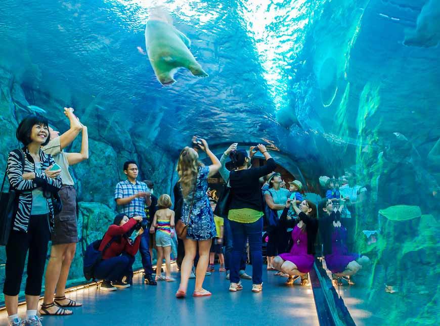 The polar bear tunnel at the Assiniboine Zoo