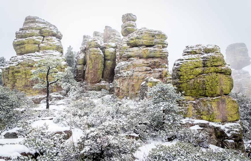Fabulous lichen on the rocks