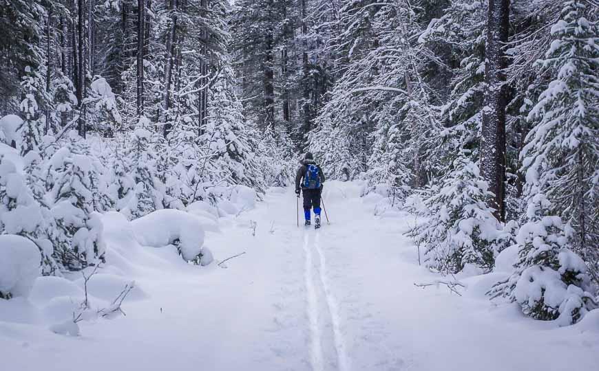 Beautiful skiing on fresh snow to the Natural Bridge