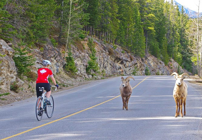 10 of the best bike rides within 75 minutes of Calgary
