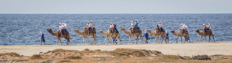 Cabo camel riding