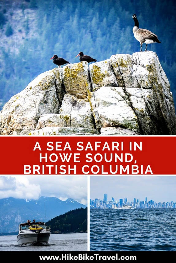 The Sea Safari One Of Vancouver S Top Day Trips Hike