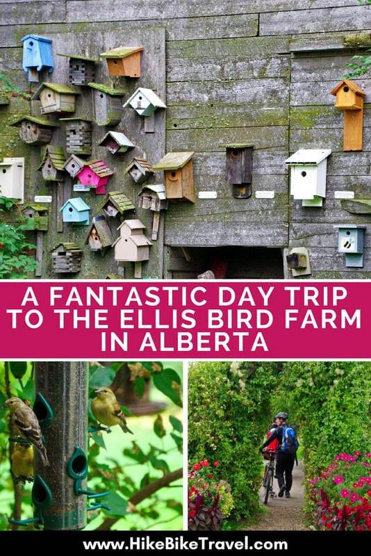 A Fantastic Day Trip to the Ellis Bird Farm in Alberta