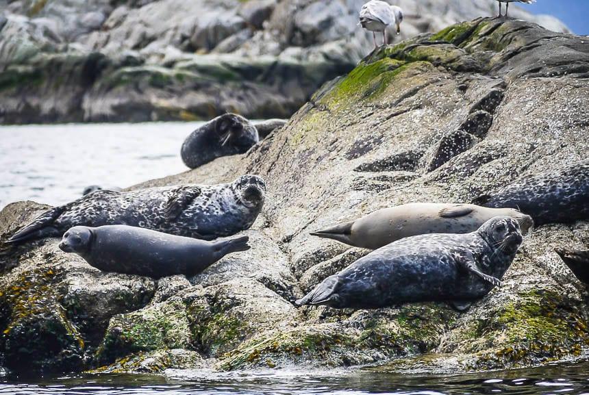 A Sea Safari in Howe Sound, British Columbia