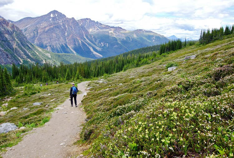5 Stunning Hikes You'll Want to do Along the Icefields Parkway