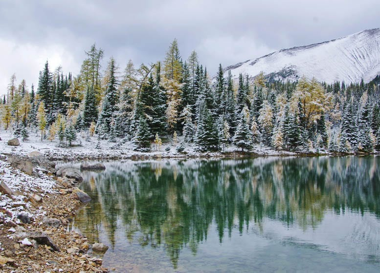 25 Larch Photos That Will Make You Wish You Were in the Mountains