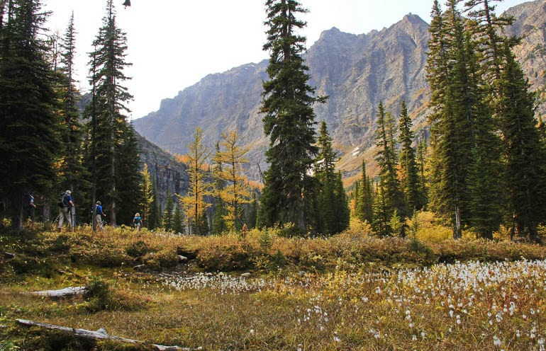Larch stands on the way to O'Brien Lake