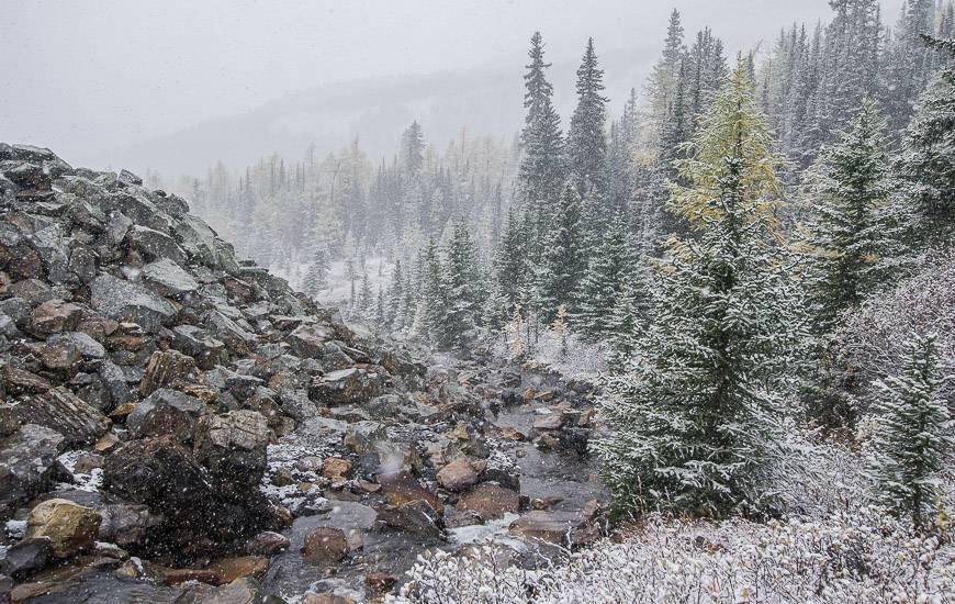 Follow a stream through a small rockpile near tree line