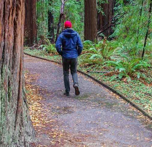 Hendy Woods giant trees