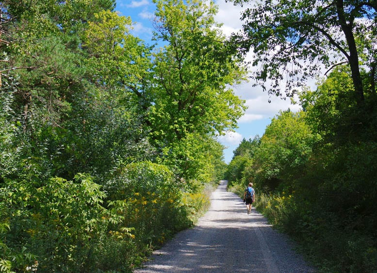 A Beautiful Section Of The Oak Ridges Moraine Trail