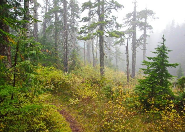 Beautiful woods near Mt Troubridge Hut on the Sunshine Coast Trail