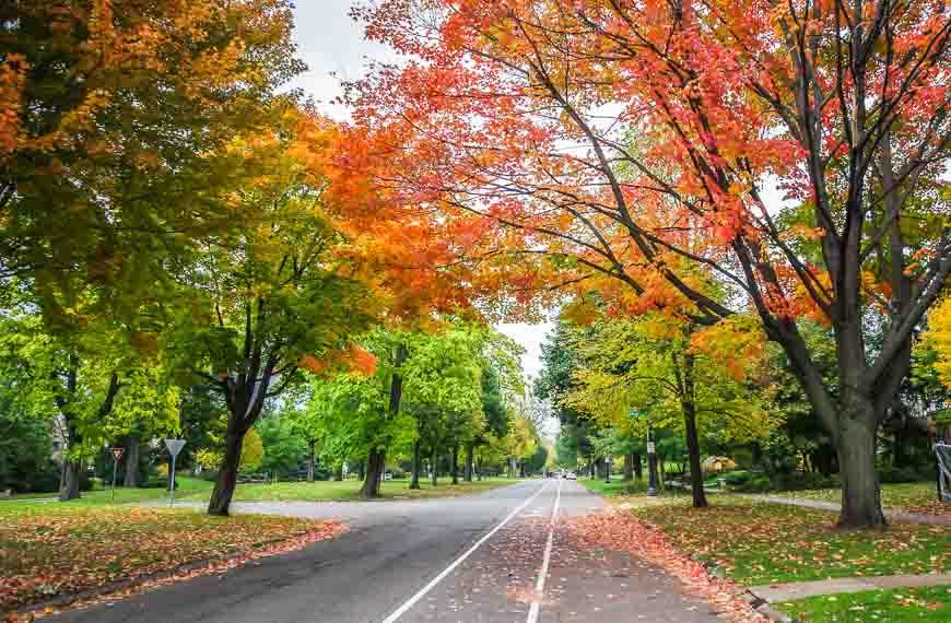 Beautiful Summit Avenue in St. Paul