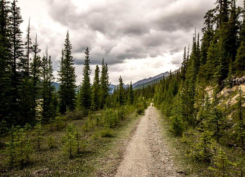 The Beauty Creek hike starts off on an arrow straight trail