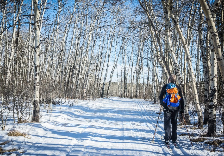 Beautiful cross-country skiing in Cypress Hills Provincial Park