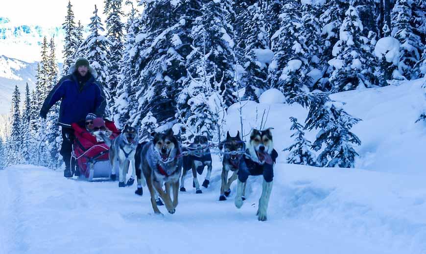 Dogsledding in Banff National Park