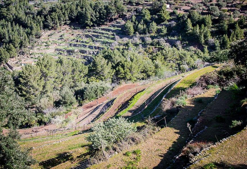 Hiking the GR221: Estellencs to Valldemossa