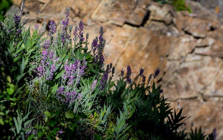 Wildflowers at Sulphur Gate