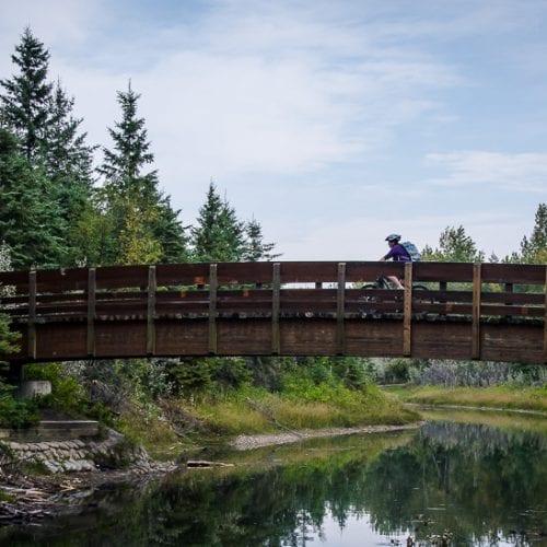 Breathtaking Red Deer - It Can Be on a Bike