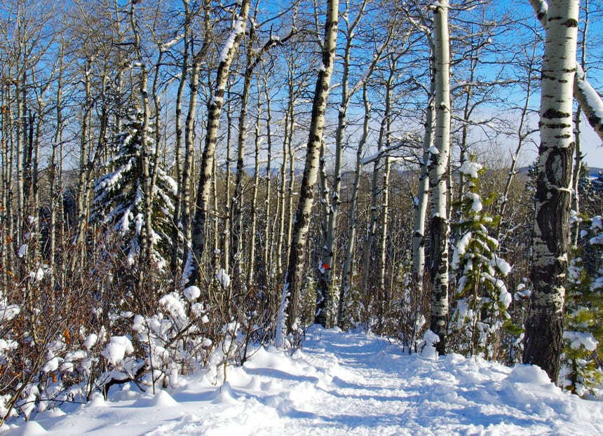 5 Easy Winter Walks Within 40 Minutes of Calgary