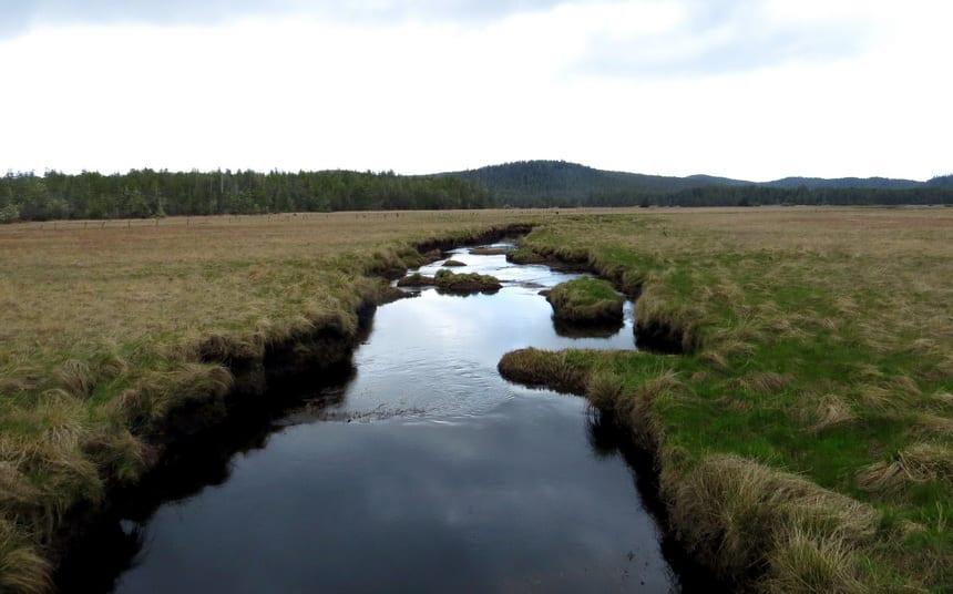 Hansen Meadows