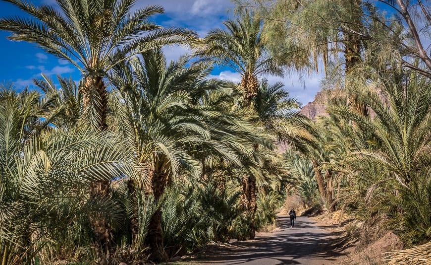 Walking through the date palms