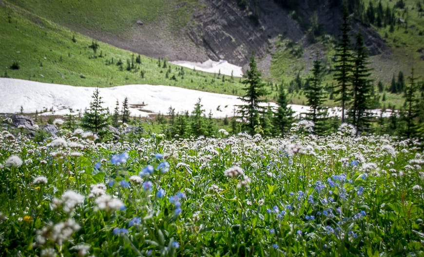 At the end of July you'll find masses of alpine wildflowers