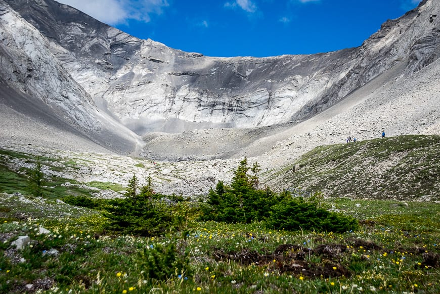The Ptarmigan Cirque hike gets you into the high alpine where you're treated to beautiful wildflowers - definitely one of the best hikes in Alberta Rockies