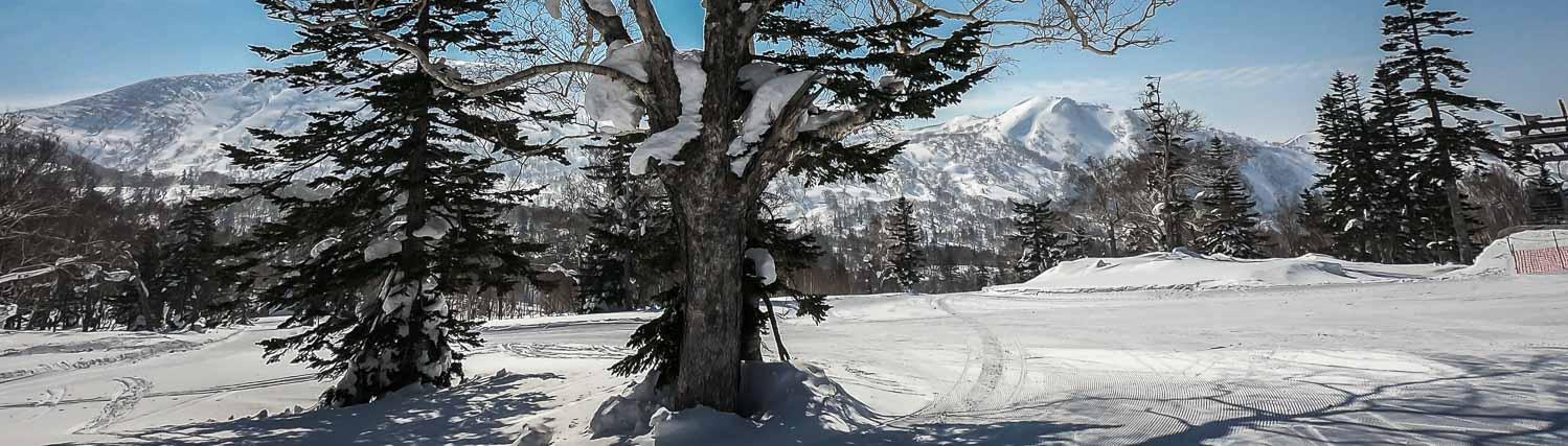 Skiing in Hokkaido, Japan