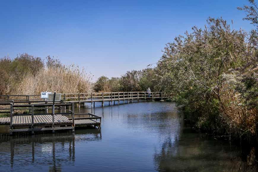 The Azraq Wetland Preserve