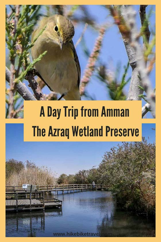Azraq Wetland Preserve in Jordan