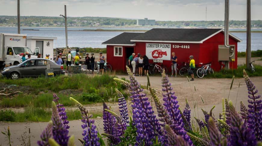 Cape Breton Island lobster pound stop