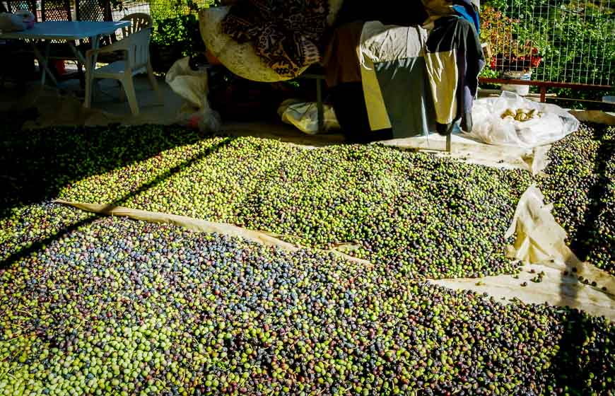 We had to stop and admire the olives drying