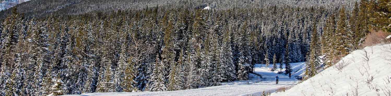 Where To Cross Country Ski: The Cascade Fire Road Near Banff