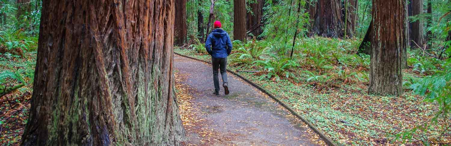 Why You'll Want To Visit Hendy Woods State Park