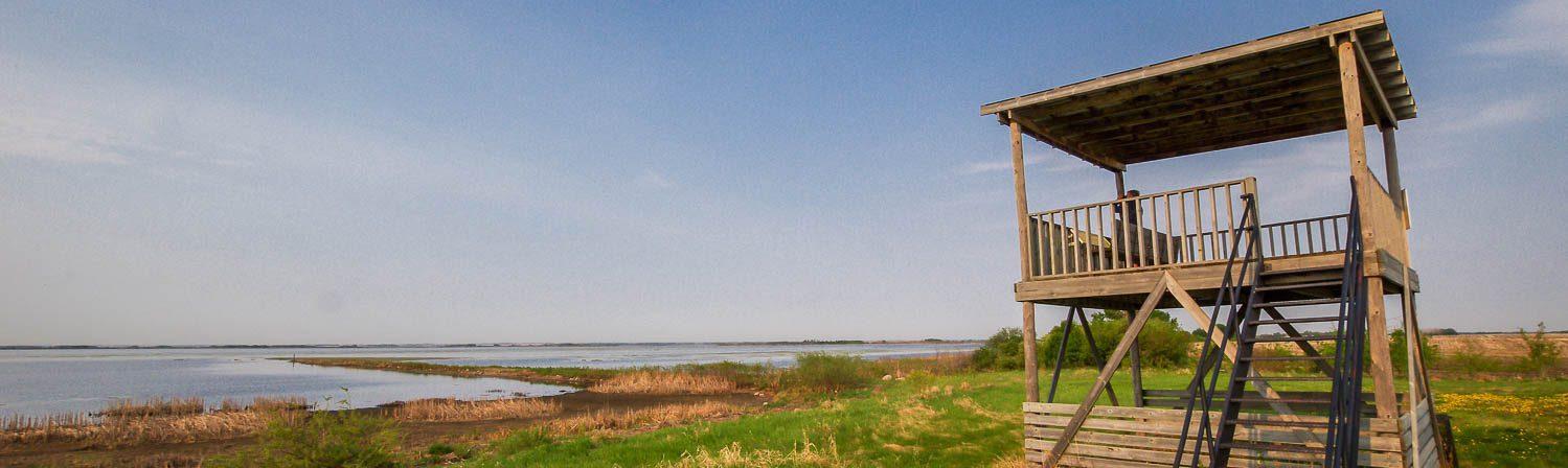 A Birding Trip To The Quill Lakes In Saskatchewan