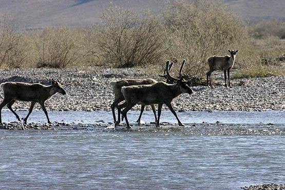 10 Nature & Wildlife Adventures In Canada