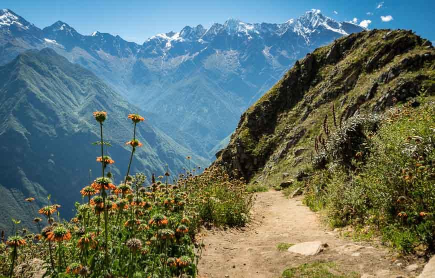 Whirls of orange wildflowers at the start of the Choquequiarao Trek
