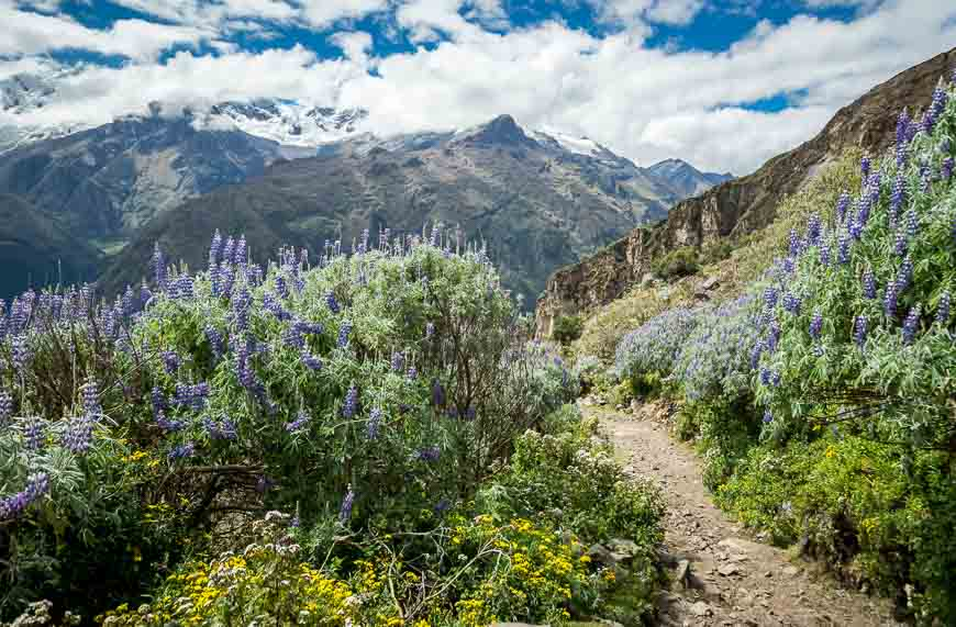 The backside of the pass was like walking was like walking through a botanical garden