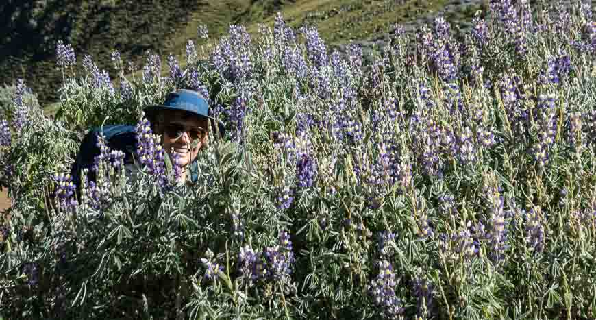 Just me and the lupins