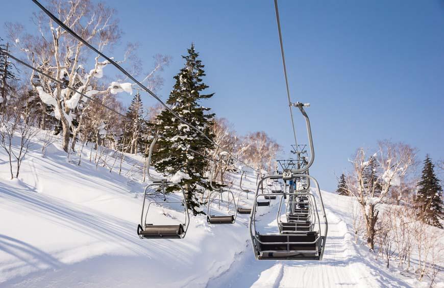 Beautiful trees at Kiroro Ski Resort